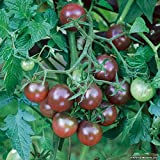 Black Cherry Heirloom Cherry Tomato 50 Seeds