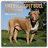 American Pit Bull Terriers 2018 12 x 12 Inch Monthly Square Wall Calendar with Foil Stamped Cover, Animals Dog Breeds