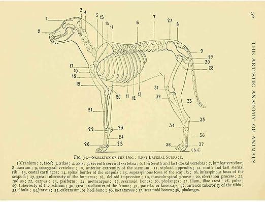 amazon.com: wee blue coo drawing page anatomy diagram animals ...  amazon.com