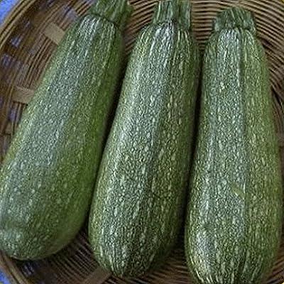 Everwilde Farms - Organic Golden Zucchini Summer Squash Seeds - Gold Vault Packet