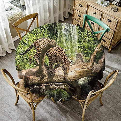 DONEECKL Wrinkle Resistant Tablecloth Safari Decor Jaguar cat on a Tree Trunk Waterfall in The Backbround Endangered Species Wild Life Fast Animal Soft and Smooth Surface D43