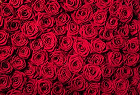 Amazon Com Laeacco 10x6 5ft Red Roses Background Vinyl