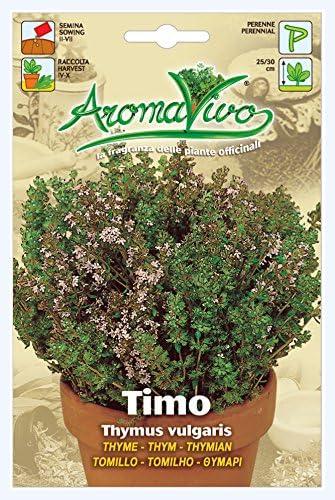 1600 Thyme Herb Seeds Thymus vulgaris Aromatic BEST QUALITY Garden Plant