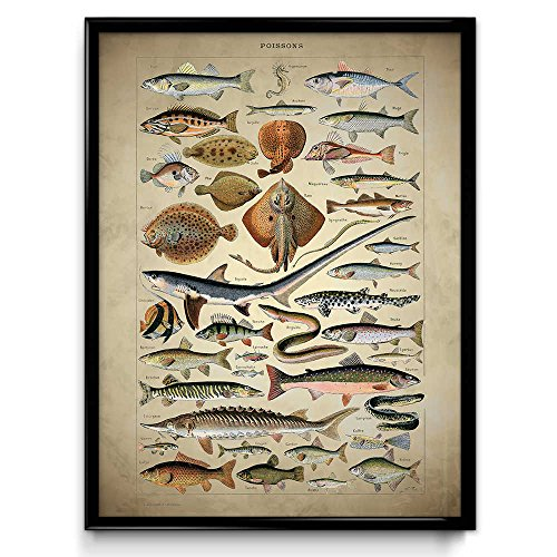 Fresh and Saltwater Fish Vintage Print - Sharks Fish Poster -