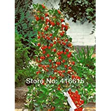 Hot Sale! 500 Climbing Red Strawberry Seeds With SALUBRIOUS TASTE NON-GMO Strawberry Mount Everest EDIBLE Fruit,Heirloom Vegetables