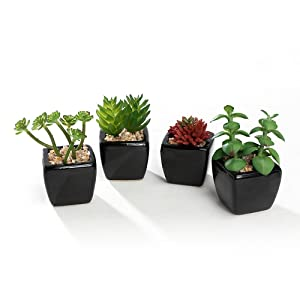 Nattol Artificial Mini Succulent Plants Potted in Cube-Shaped Black Ceramic Pots for Home Décor, Set of 4