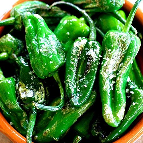 (Pimientos DE Padron-100 Seeds (Padron Pepper)- Hot/Sweet/Mild,Spanish Heirloom !)
