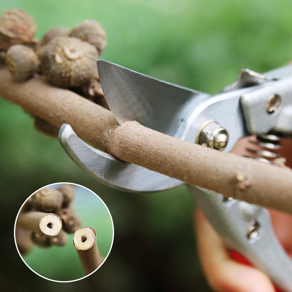 HOSPORT Tijeras de Podar Tijeras de Jardinería Professional, Hoja de Acero SK-5 Herramientas de Mano para Jardín