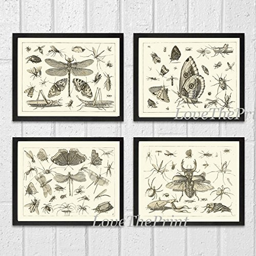 Art Print SET of 4 Beautiful Antique Dragonfly Butterfly Beetle Moth Spider Spring Summer Garden Insects Natural Science Illustration Home Room Wall Interior Decor Unframed FLS