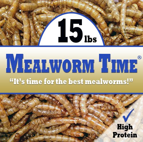MealwormTime Dried Mealworms (15 lbs) - Feed to Chickens & Wild Birds (Wild Animal Feed)