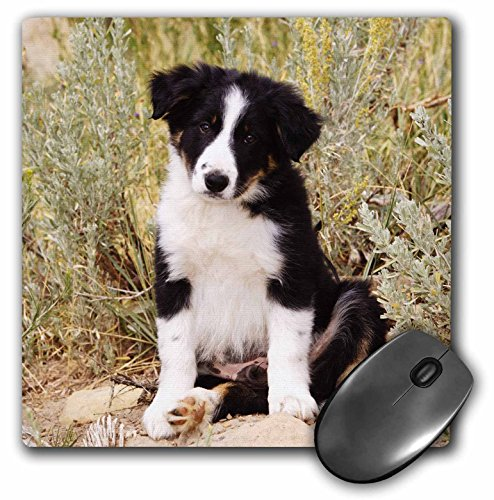 3dRose Border Collie Puppy Dog Na02 Pwo0040 Piperanne Worcester Mouse Pad (mp_140297_1)
