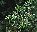 PurePlant Essentials Custom Formula Bartholin Gland