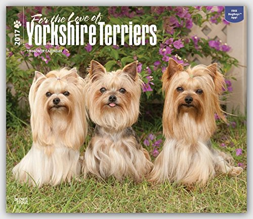 Yorkshire Terriers - For the Love of - Yorkies 2017 - 18-Monatskalender mit freier DogDays-App: Original BrownTrout-Kalender - Deluxe [Mehrsprachig] [Kalender] (Deluxe-Kalender)