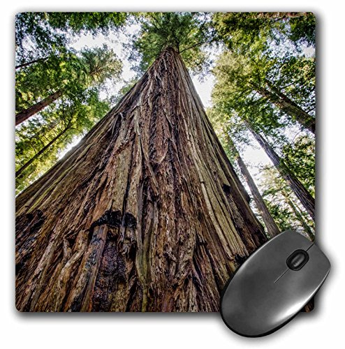 3dRose Roosevelt Grove, Humboldt Redwoods State Park, California Mouse Pad, 8