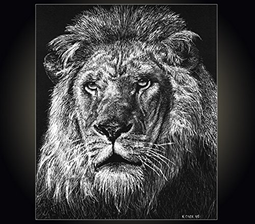 "Lithograph print""Lion"" A pen and ink on scratchboard drawing of a lion"