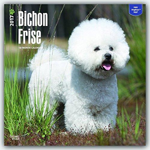 Bichon Frise - 2017 Calendar 12 x 12in - Bichon Frise Calendar Holder