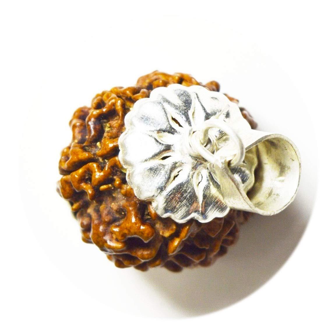 Gemsonclick Natural 9 Mukhi Nine Face Nepail Rudraksha Seed Pendant Spiritual Bead Sterling Silver Locket