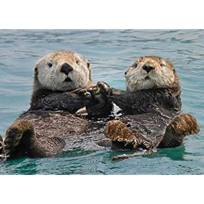 Two Boxing Sea Otters 1000 Jigsaw Puzzle Wooden Jigsaw Jigsaw Floor Jigsaw Puzzle Adult Animal Jigsaw Children Intelligence Game Learning Education Decompression Toy: Toys & Games