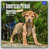 American Pit Bull Terrier Puppies 2017 Square (Multilingual Edition)