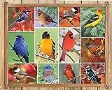 Springbok Songbirds Jigsaw Puzzle 1000-Piece