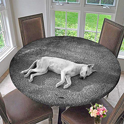 PINAFORE HOME Round Fitted Tablecloth The Homeless Animal Dog die Beside The Road for All Occasions 50