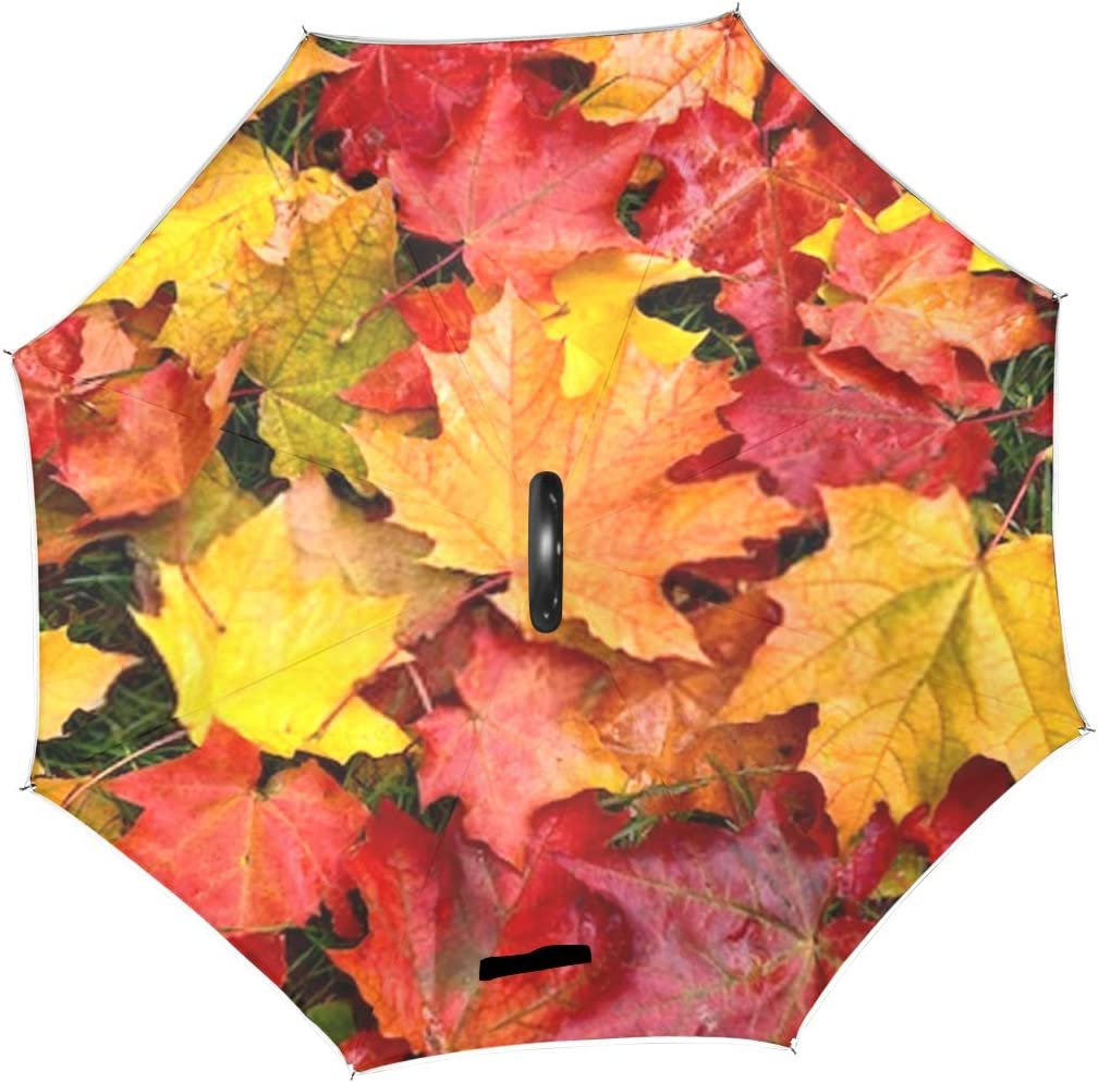 Double Layer Inverted Inverted Umbrella Is Light And Sturdy Autumn Multicolored Maple Leaves Lie On Reverse Umbrella And Windproof Umbrella Edge Nigh