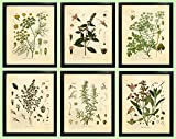 Ink Inc. Set of 6 Herb Botanical Prints, Unframed, 8x10 inch Matte, Thyme, Mint, Rosemary, Parsley, Sage, Fennel