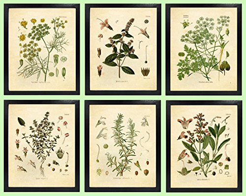 Ink Inc. Set of 6 Herb Botanical Prints, Unframed, 8x10 inch Matte, Thyme, Mint, Rosemary, Parsley, Sage, Fennel ()