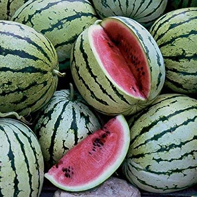 Chris Cross Watermelon Seeds - 10+ Rare Non-GMO Organic Heirloom Watermelon Seeds : Garden & Outdoor