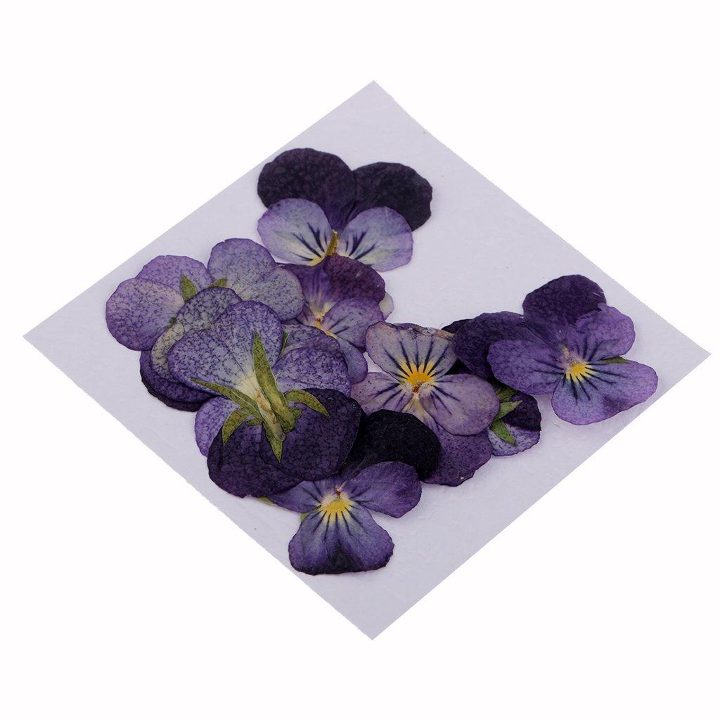 Homyl 12 Unids Flores Natural Prensados Secas Llamativos Usar para Hacer Manualidades Color Violeta de DIY