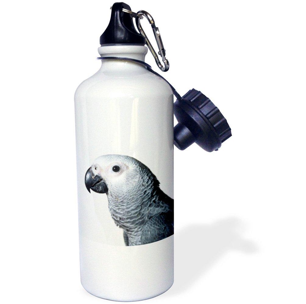 White 3dRose wb/_4038/_1Bernese Mountain Dog Sports Water Bottle 21 oz