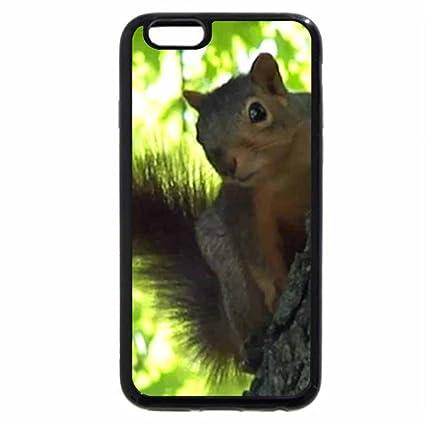 coque iphone 6 ecureuil