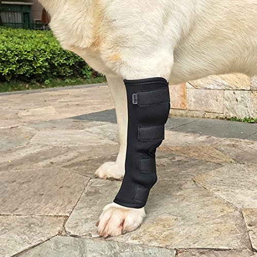 WSGEE Dog Canine Rear Leg Knee Brace Hock Joint Arthritis Wrap for Heals Prevents Injuries Sprains Helps with Loss of Stability - XL