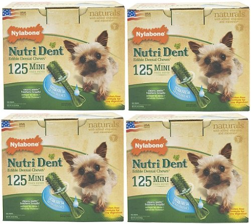 Nylabone Nutri Dent Extra Fresh 500ct Pantry Pack Mini (4x125ct), My Pet Supplies