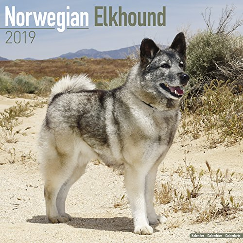 Norwegian Elkhound Calendar - Dog Breed Calendars - 2018 - 2019 Wall Calendars - 16 Month by Avonside