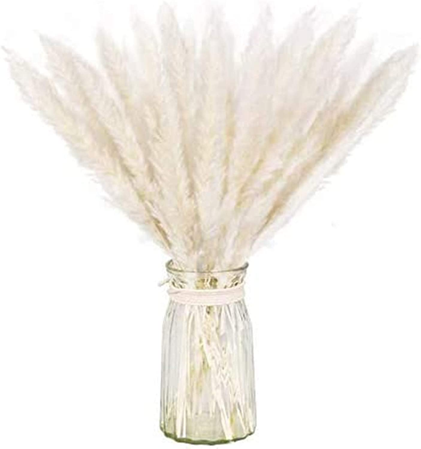 Dry Pampas Grass Natural Dried Bundle for Home Decor 20pcs(White)