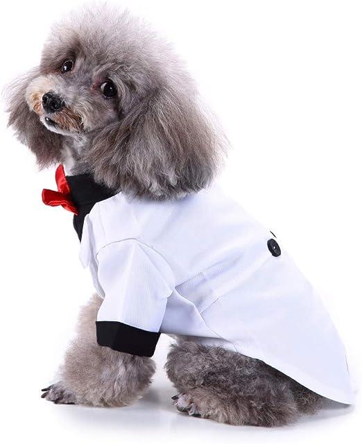yongqxxkj Smoking para Animales domésticos, otoño, Invierno, Ropa Elegante para Animales domésticos, Cachorro de Perro, Camisa, Mariposa, Vestido de Ceremonia Nupcial Formal de Smoking: Amazon.es: Productos para mascotas