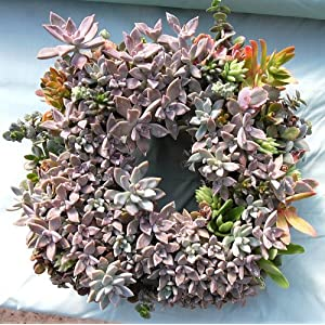 "11"" Sphagnum Moss Living Wreath Form, Square, Natural/Organic Original 2"