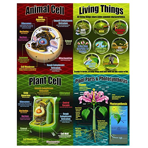 McDonald Publishing Life Science Poster Set (MC-P077) by McDonald Publishing