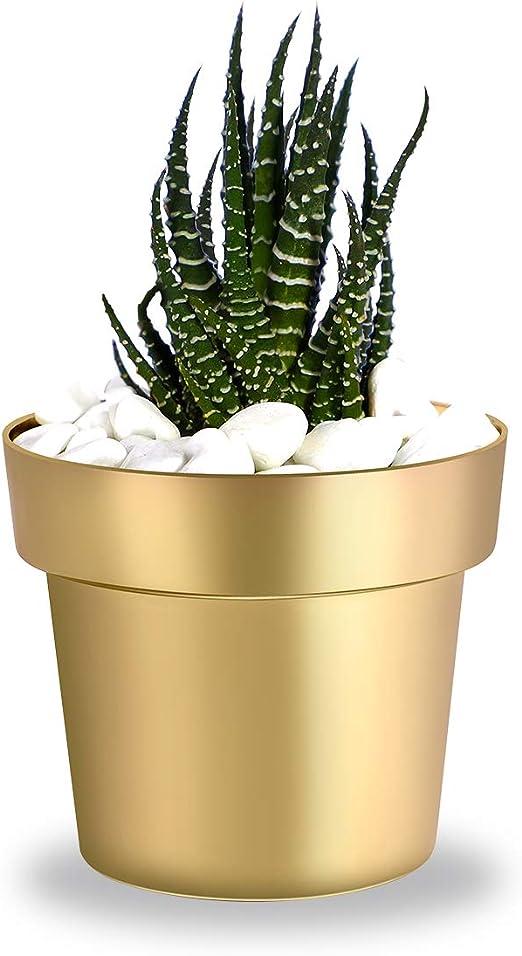 Maison Jardin succulentes plantes pot cactus plante fleur Support Plastique Panier