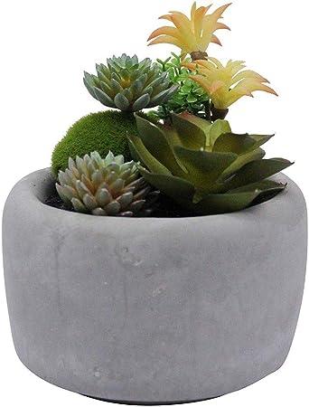 Palmtree Homeware Arrangement De Plantes Succulentes Artificielles