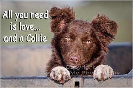 Collie I Love My Dog Fridge Magnet
