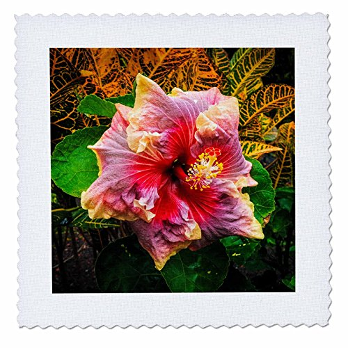 3dRose Danita Delimont - Flowers - Hibiscus flower, Kona Coast, The Big Island, Hawaii, Usa - 16x16 inch quilt square (qs_259241_6) by 3dRose