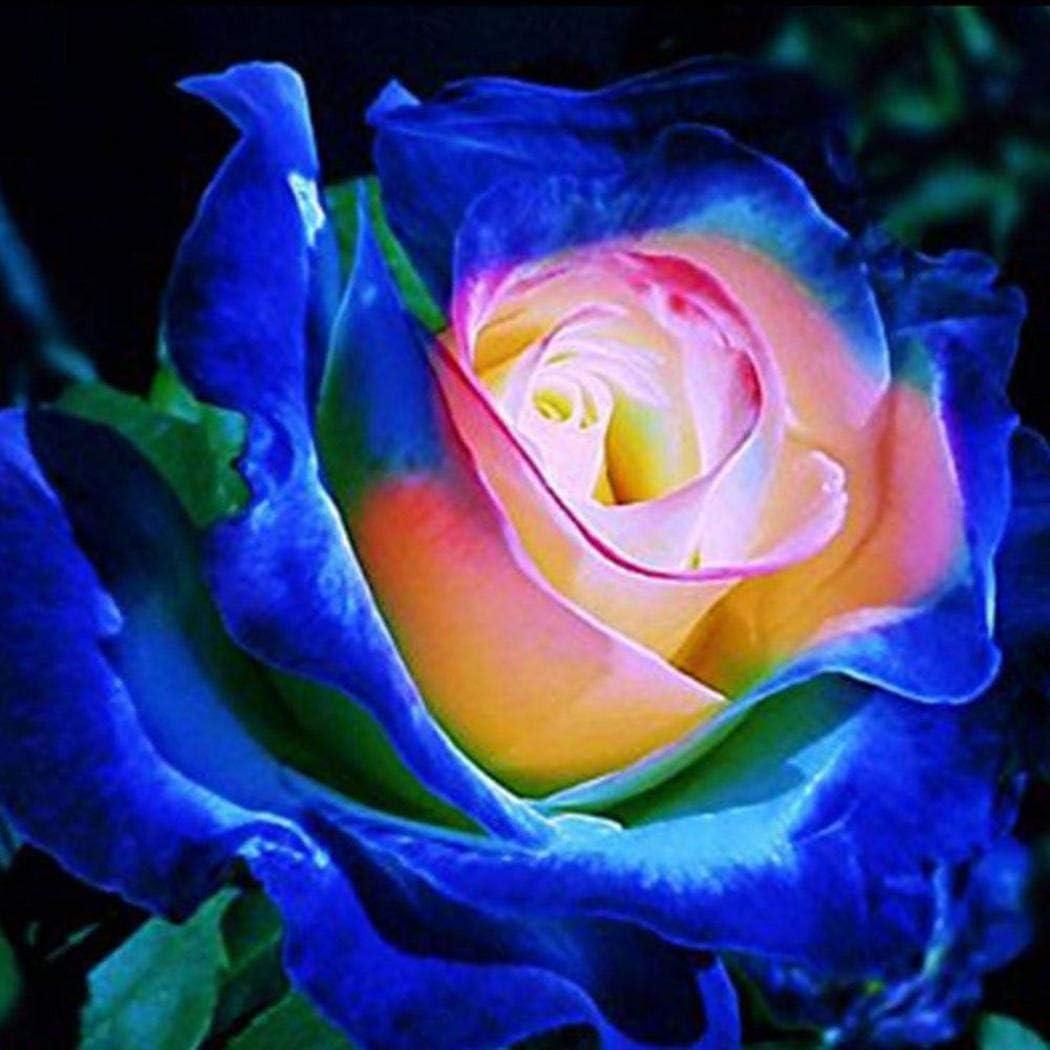 ADOLENB Seed House - Semillas de rosa azul Semillas de flor