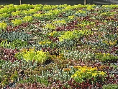 Specially formulated British Mix 5 Grams Sedum Seed Mix for Green Roofs