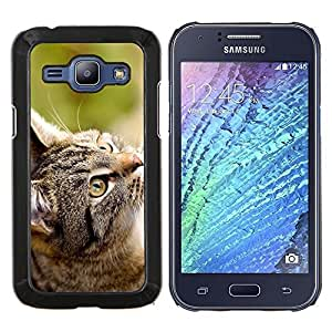 Stuss Case / Funda Carcasa protectora - Gato Gris - Samsung Galaxy J1 J100