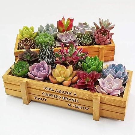 Amazon Com Vintage Succulent Planter Wooden Boxes Garden Plant