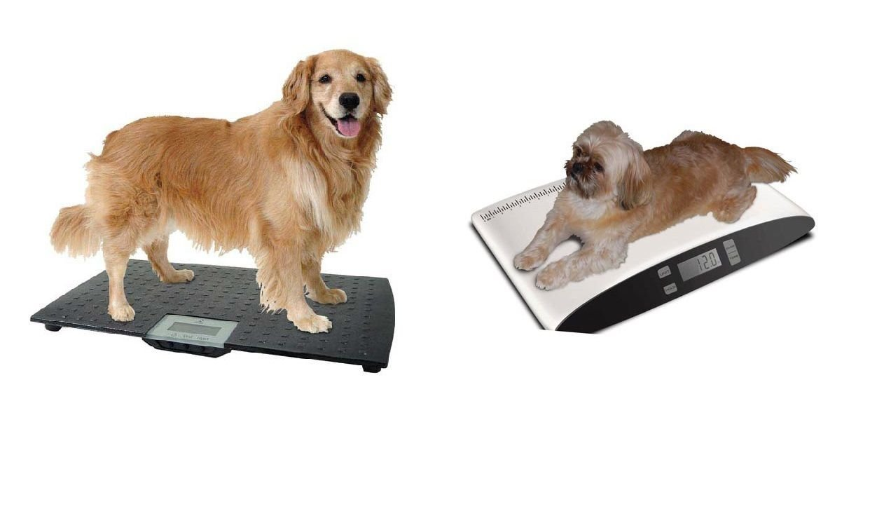 Precision Digital Pet Scales Professional Dog Groomer Vet Shelter - Choose Size(Small - Up To 55 lbs)