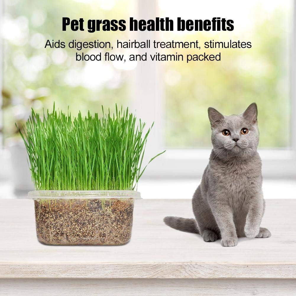 Kit de cultivo de hierba de gato, bricolaje kit de germinación de hierba para mascotas orgánico natural Kit de cultivo de hierba para mascotas Semilla de hierba de gato para gatos Perros