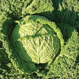 buy Famosa F1 Hybrid Cabbage Seeds - Flavor displays well fresh or cooked. !!!!(25 - Seeds) now, new 2019-2018 bestseller, review and Photo, best price $2.42